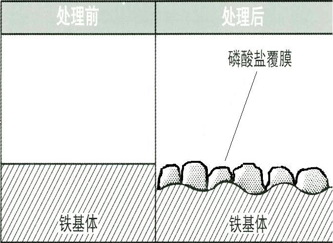 a)磷化膜的生长示意图.png